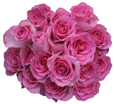 Roses Pink White