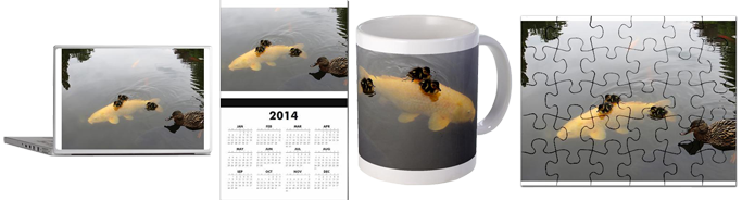 Cafepress Shop - ducklings hitching a ride on a koi carp